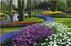 A 35 hectare home of over 7 million tulips, daffodils and hyacinths (keukenhof.nl, 2013) A MUST VISIT!!!!!!!!!!