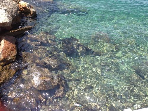 The waters were sooooo clear around Hydra! My heart kept expanding...